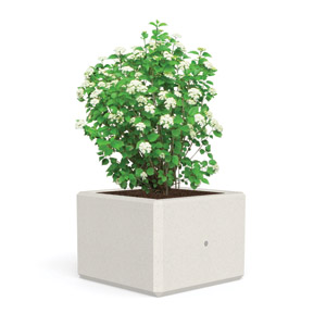 Berry Planter by Bellitalia